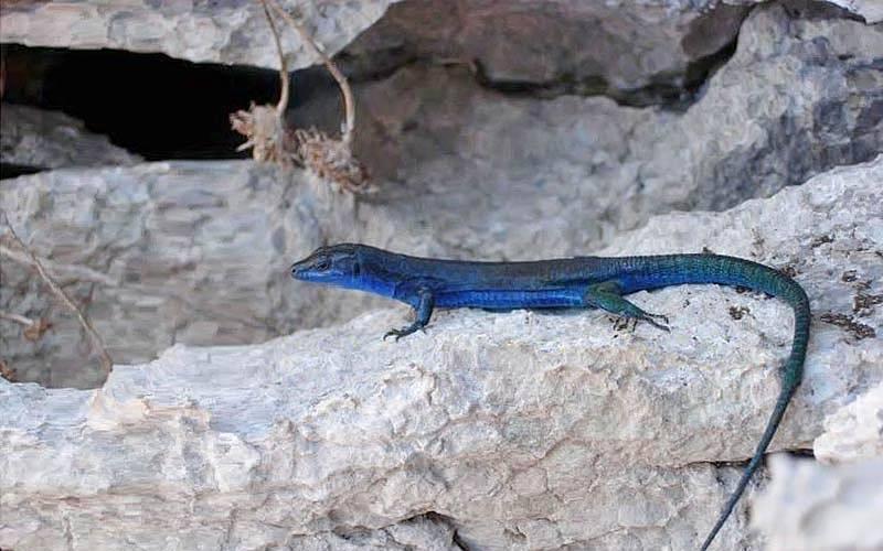 Flora e Fauna de Capri