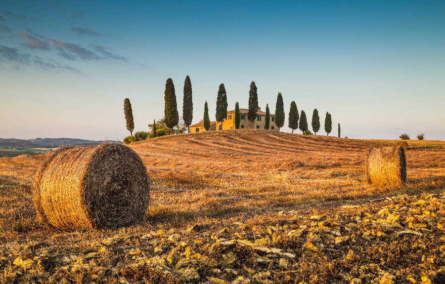 Tuscany Art & Wine Tour - Group Tours