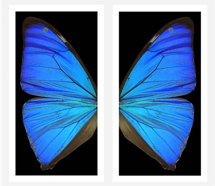 Le ali dell'angelo primo