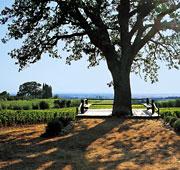 Wines of Ornellaia