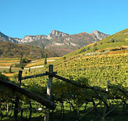 L'arte del vino in Alto Adige