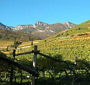 The art of wine in Alto Adige