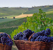 Land of wine and truffles