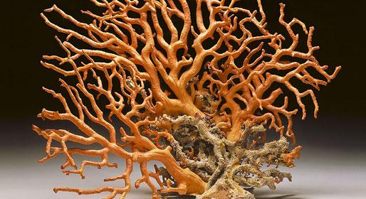 I poteri del corallo