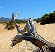 Le dune del Maestrale