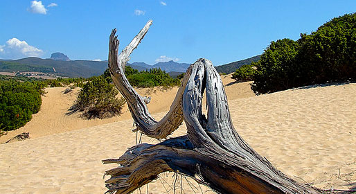 Sardinian sand castles