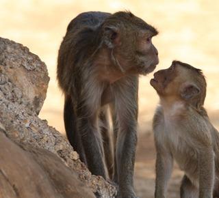 Zoo Safari, fasano Hotel