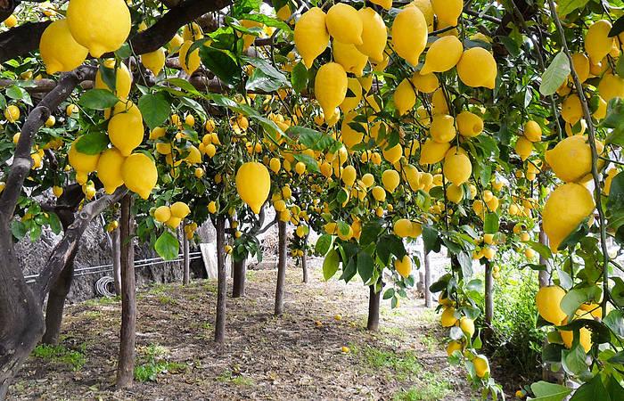 Limone Between Amalfi And Ravello Villas Amalfi Coast