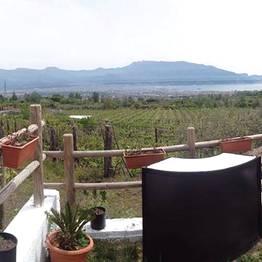 Wine Tasting Tour - Lacryma Christi