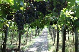 Astarita Car Service - Lacryma Christi Wine Tour