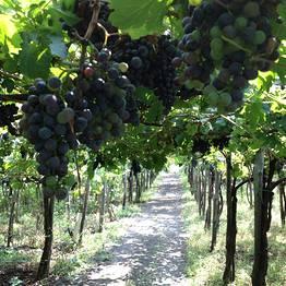 Astarita Car Service - Lacryma Christi Wine Tour + Pompei o Ercolano