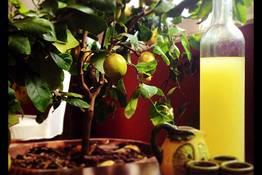 Michel'angelo - Lemon Twist Masterclass