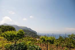 Capri Online - Piedigrotta Tiberiana