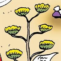 Fiore dell'Agave