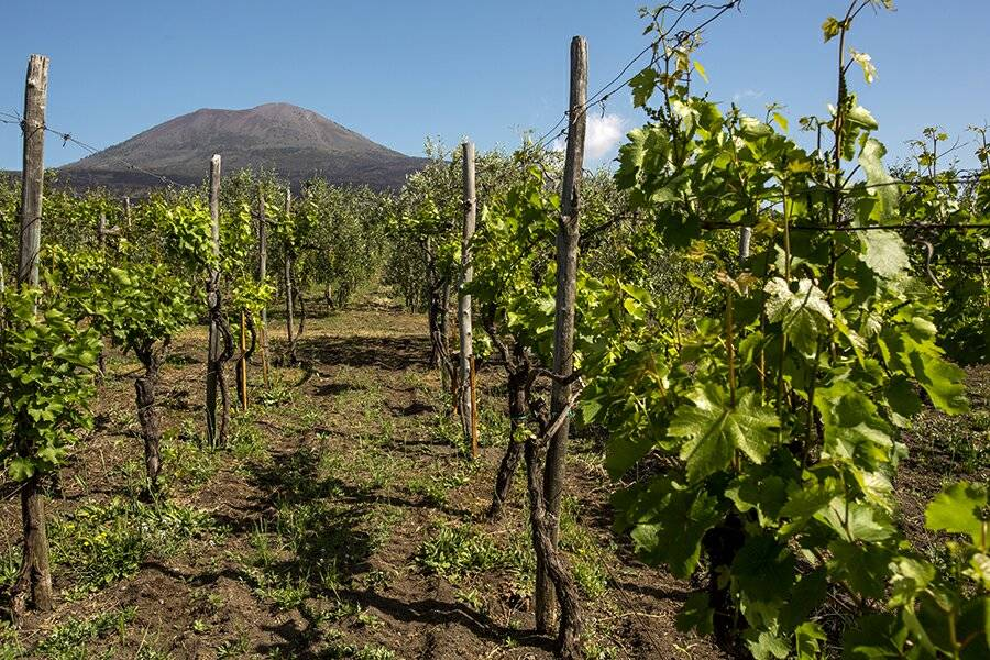 Wine Tour in Costiera Amalfitana e sul Vesuvio
