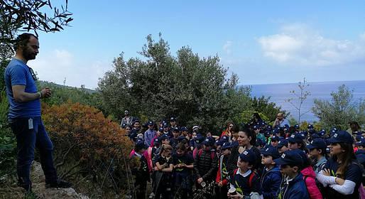 L'Oro di Capri, è tempo di raccolta delle olive