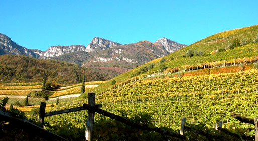 The art of wine in Alto Adige