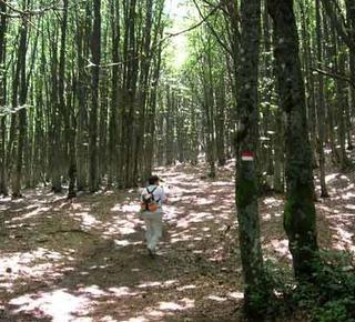 La Romagna nel verde segreto delle vie d'acqua Hotel