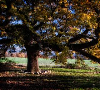 """Oak of """"Checche"""" Hotel"""
