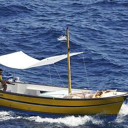 Capri Whales Capri