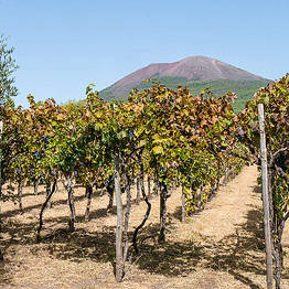 "Cantina del Vesuvio - Organic ""Superiore"" Wine Tasting + Lunch on Vesuvius"