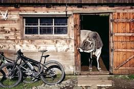 E-bike tour + degustazione in Penisola Sorrentina