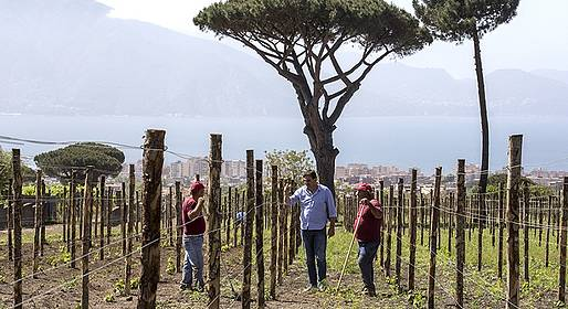 Cantina del Vesuvio - Lacryma Christi Tasting with Lunch and Transfer