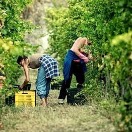 Goldentours - Visita guidata a Pompei + degustazione vini del Vesuvio