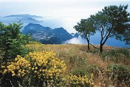 Capri: dalla Scala Fenicia a Monte Solaro, tour privato