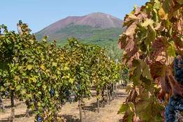 Wine Tour on the Slopes of Mt Vesuvius - Car and Driver