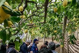 Trekking guidato sul sentiero dei limoni di Ravello