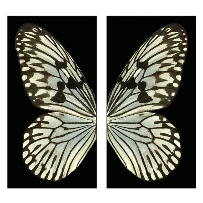 Le ali dell'angelo decimo