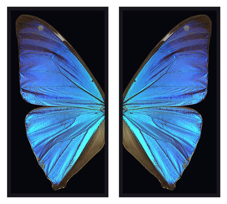 Le ali dell'angelo dodicesimo