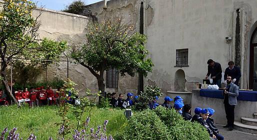 Gli alunni di Capri alla scoperta dell'olivo e dell'olio di Capri