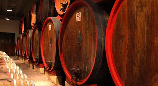 Vines of Venice