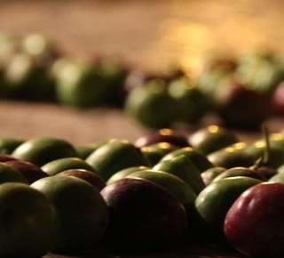 The Ways Oil and Olive of Gaeta. Hotel
