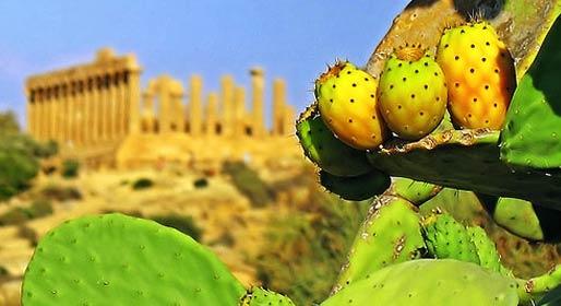 Sicilian taste tour