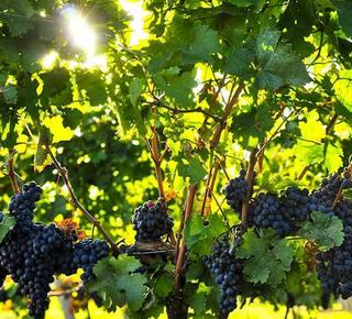 Monaci per gli amanti del buon cibo e del vino