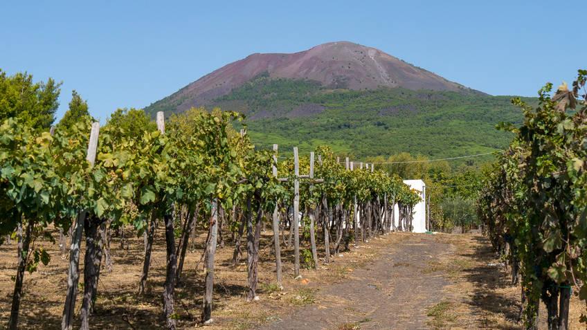 Cantina del Vesuvio Prodotti tipici Trecase