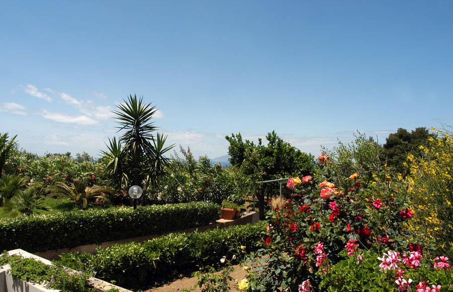 Villa Damecuta Capri: 3 reasons to book here | Capri Booking