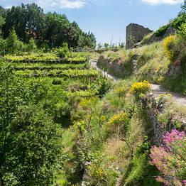 Escursione guidata sul Sentiero degli Dei da Sorrento