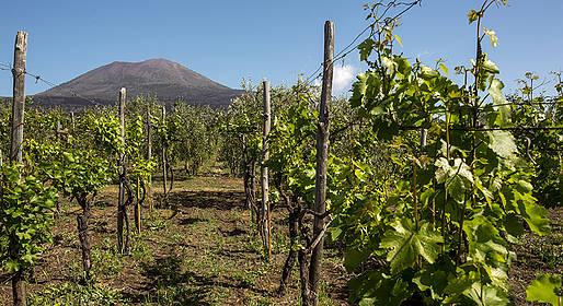 Cantina del Vesuvio - Grape Stomping and Lacryma Christi Tasting with Lunch