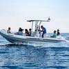 Capri Whales - Noleggio gommone da 250 cv a Capri, con patente nautica
