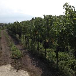 Astarita Car Service - Wine Tour Lacryma Christi + visita a Pompei o Ercolano