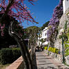 Nesea Eventos Culturais - The Island of Capri for All Five Senses