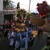 Caprionline - Processione di Sant'Antonio
