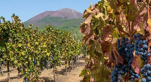 Luxury Limo Positano - Wine Tour on the Slopes of Mt Vesuvius - Car and Driver
