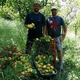 Farm Experience