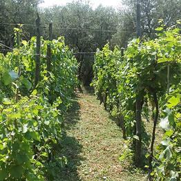 Agriturismo Antico Casale  - Farm Experience