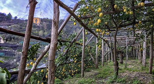Cartotrekking - The Path of the Lemons, rural life of the Amalficoat